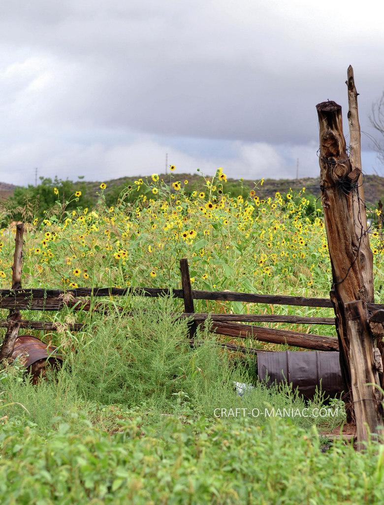 rustic farm fence shot