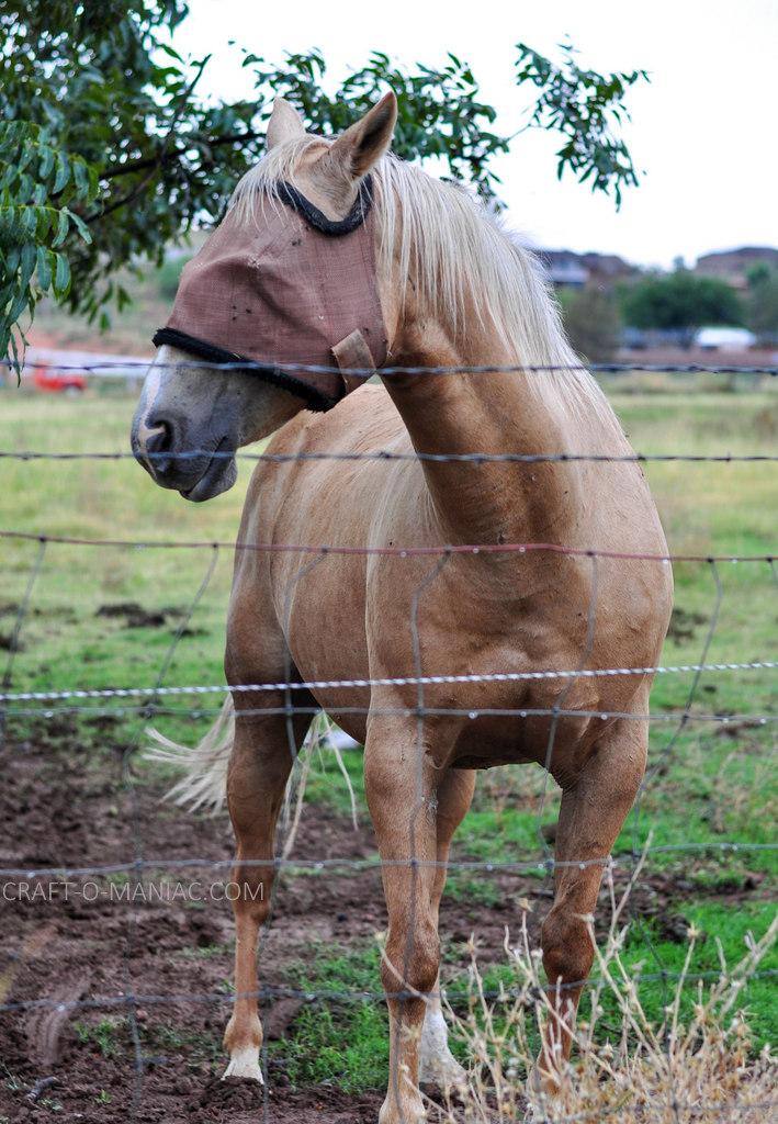 rustic farm horse 4