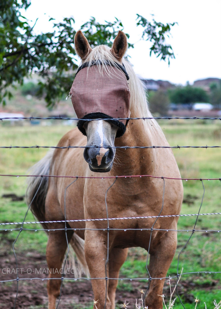 rustic farm horse 3
