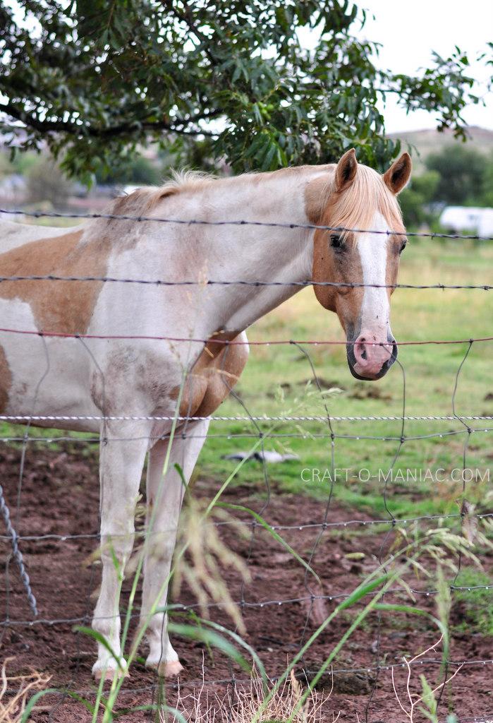 rustic farm horse 2