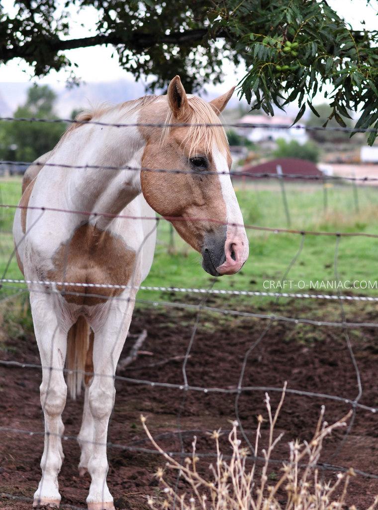 rustic farm horse 1