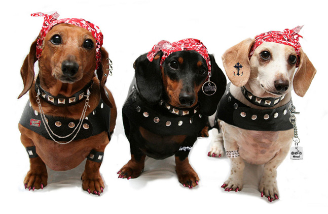 http://www.craft-o-maniac.com/wp-content/uploads/2015/01/dogs-dressed-up.jpg