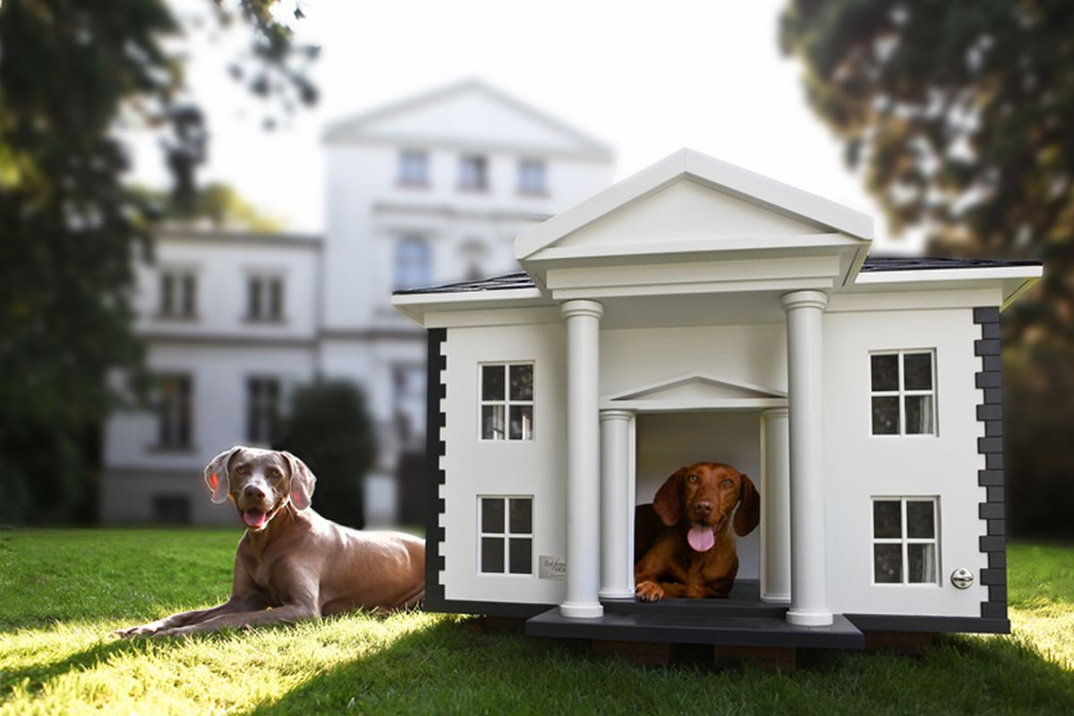 how to build a doghouse for 3 dogs