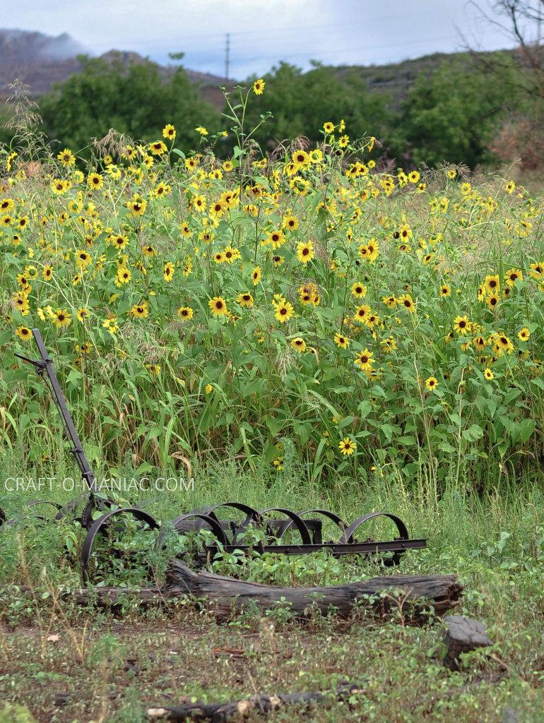 rustic farm flowers