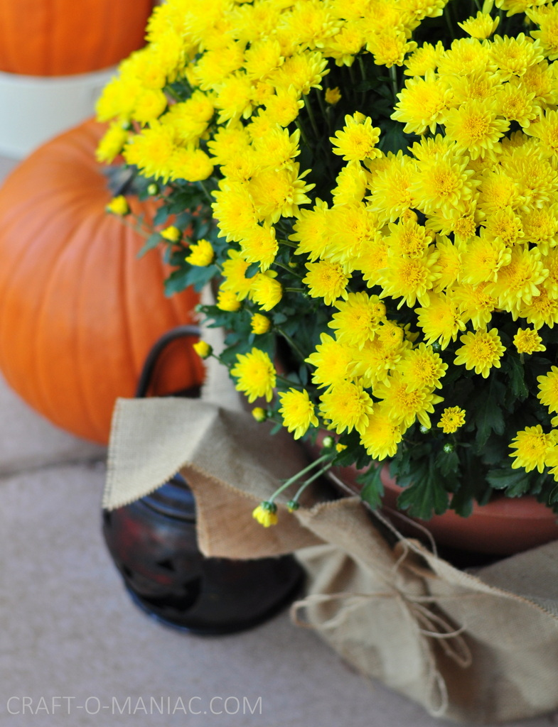 fall porch mums fav shot